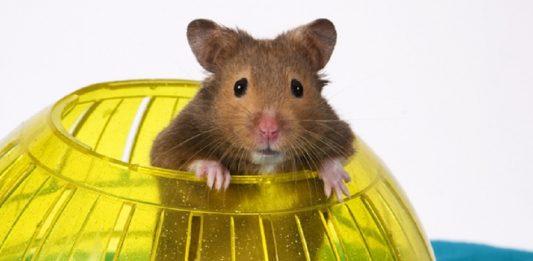 los mejores juegos para hamsters juguetes para roedores