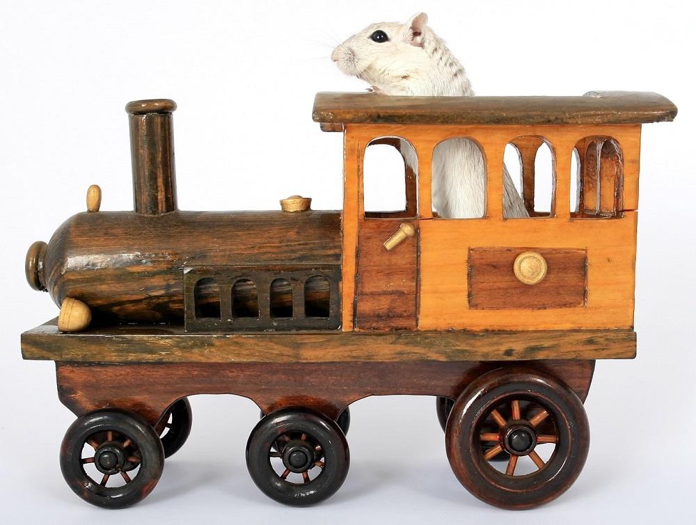 lista de las maderas tóxicas para los hamsters foto de hamster sirio comun dorado ¿Puedo hacer un viaje en coche con mi hámster?