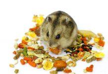 comida para hamster comida de hamster