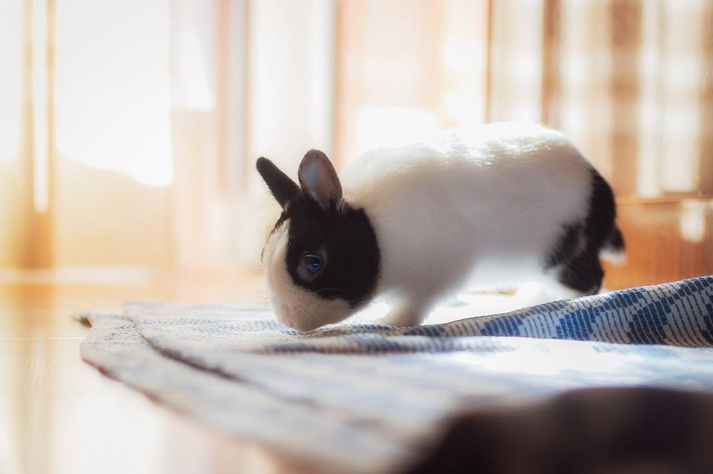 conejo toy bicolor blanco y negro hamster online