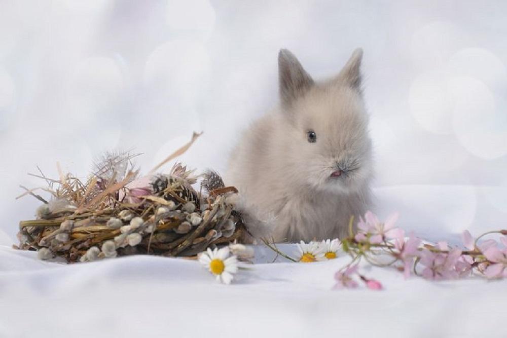 conejo toy enano super enano gris hamster o