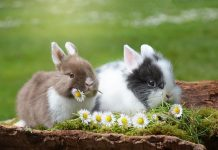 conejo toy hamster online org