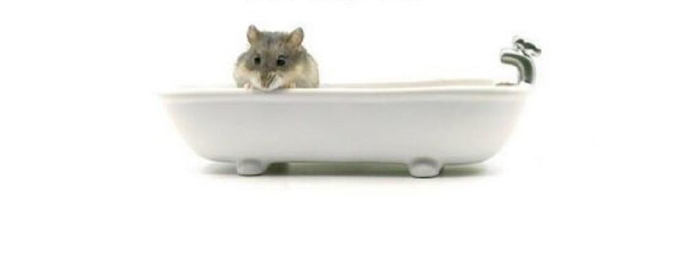 bañando a tu hamster en su propia bañera correctamente.