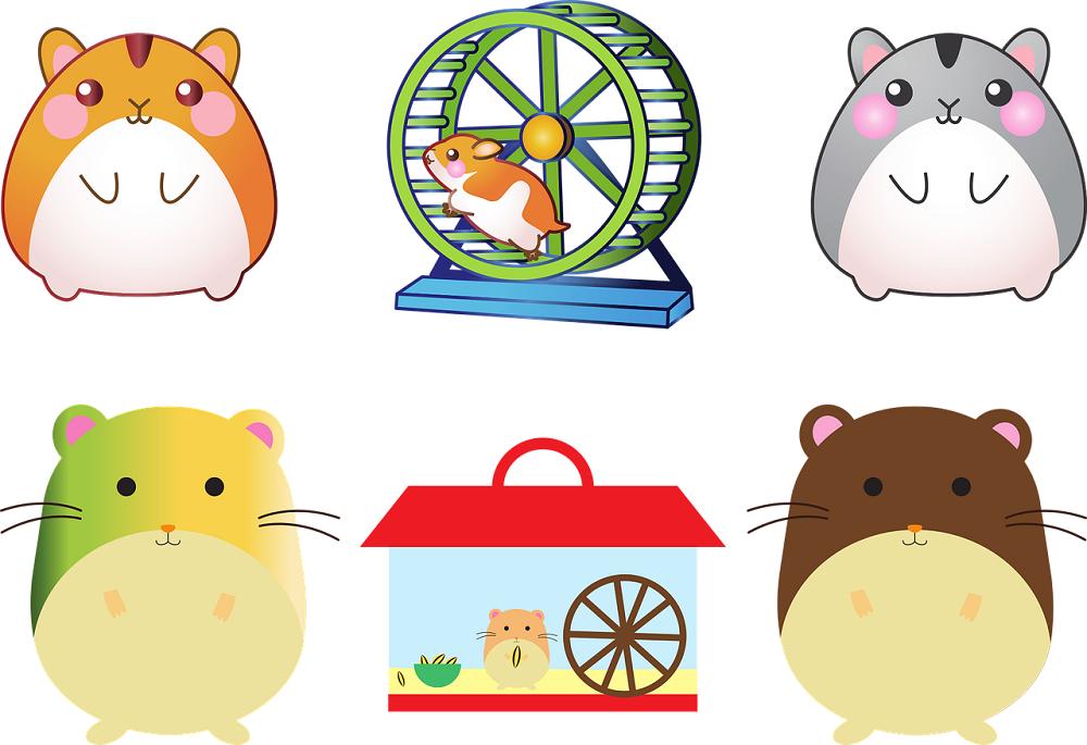 como limpiar la jaula de tu hamster correctamtente