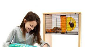 como limpiar la jaula de tu hamster facilmente