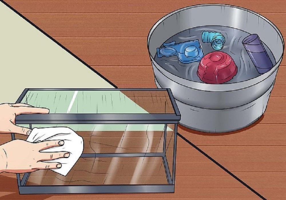 como limpiar la jaula de tu hamster clean hamster cage