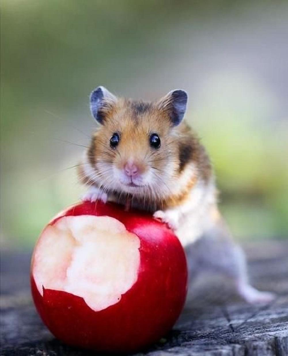Me han pillado infraganti comiendo mi manzana.