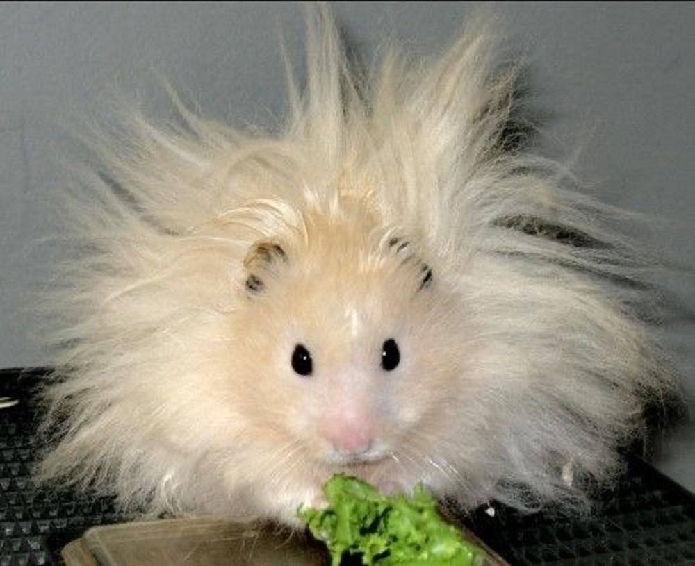 hamster online photos eisntein