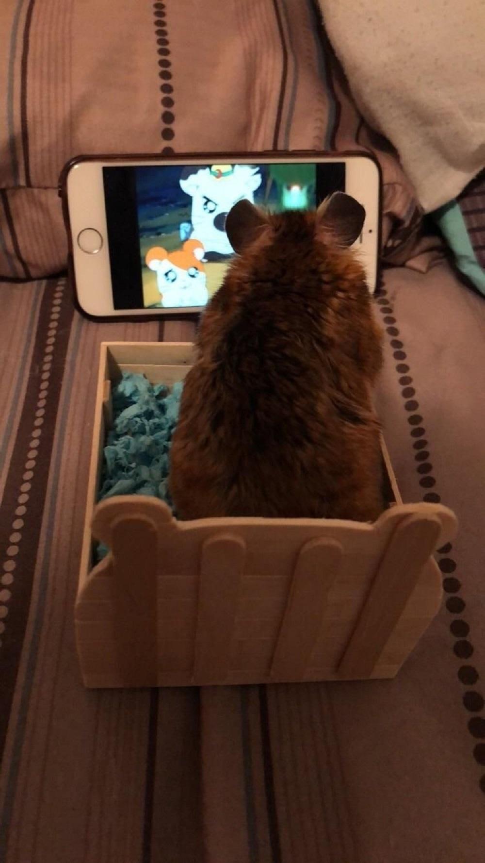 hamster viendo la television фотографии хомяков