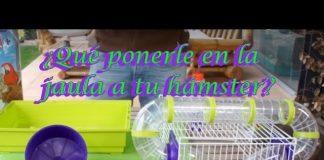jaulas de hamsters